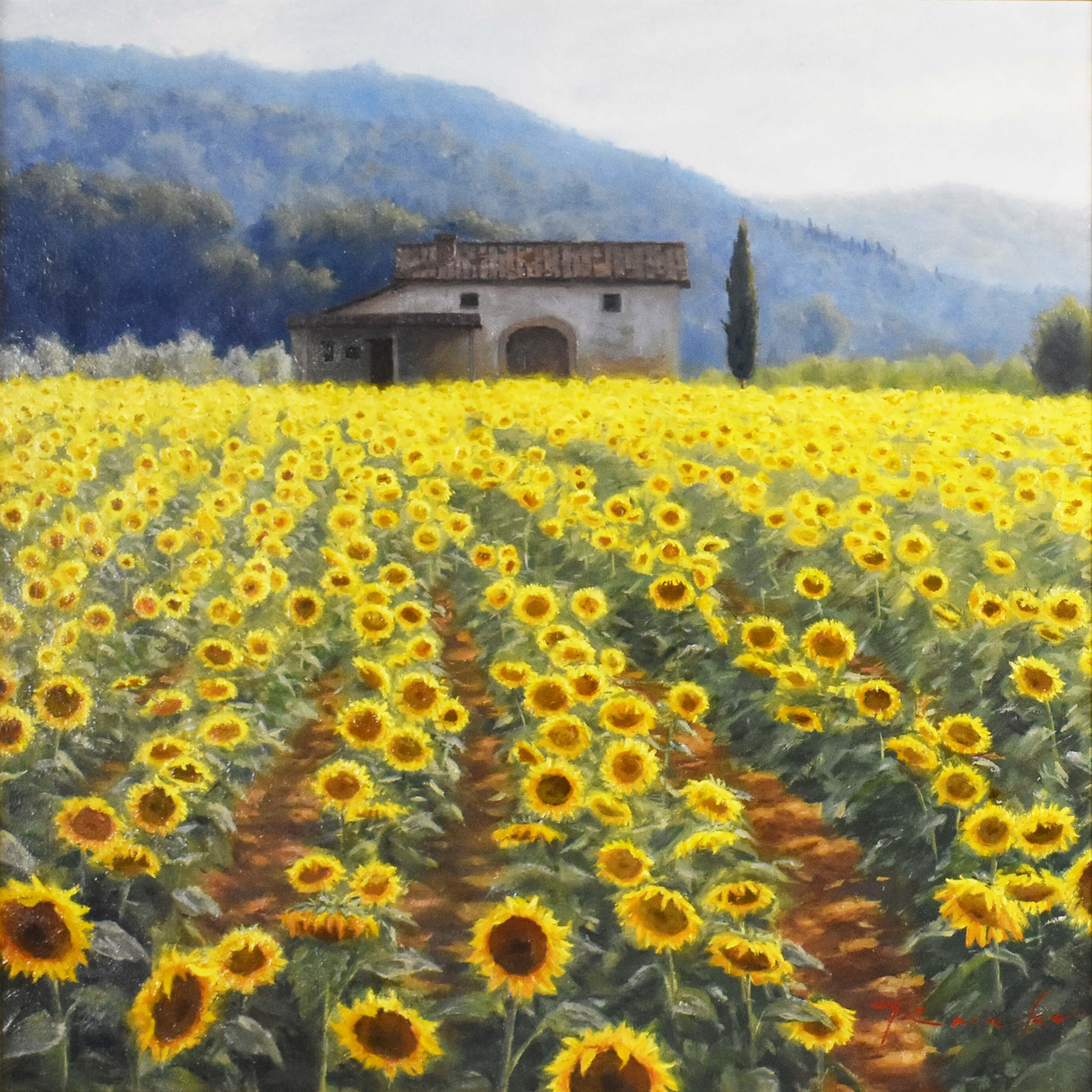 Tuscany holiday  Sunflower field