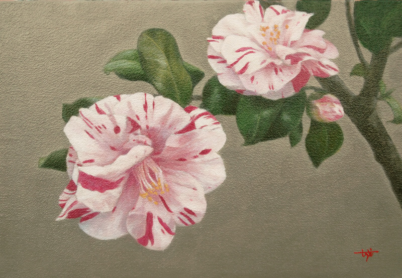 Winter color -camellia-