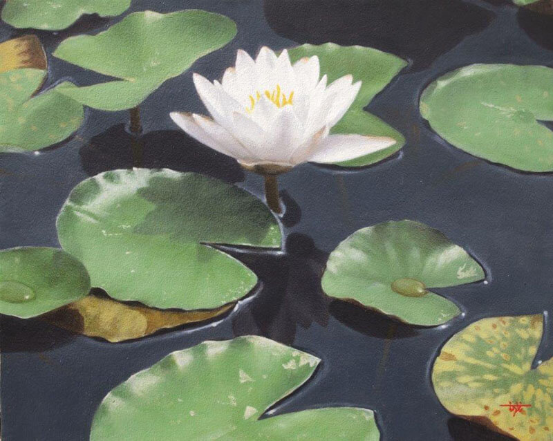 water lily of early morning