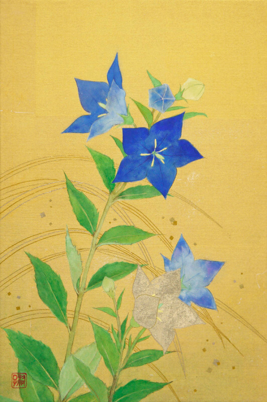 Chinese bellflower