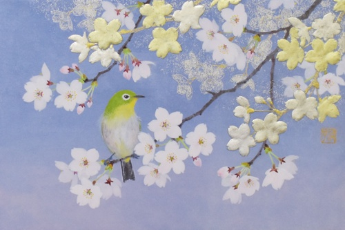 white eye on the cherry blossoms